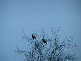 ...вы можете найти в архивах: птица гага фото и птицы средней полосы фото.